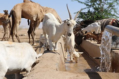 Ethiopia: Thirsty for rain (EU Civil Protection and Humanitarian Aid) Tags: africa drought ethiopia elnino europeancommission resilience malnutrition humanitarianaid foodinsecurity