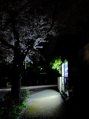 DSCF4943 (masanori_ootaka) Tags: fujifilm x20