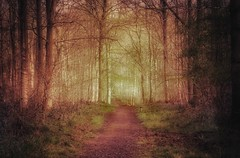 Magic Forest (Nige H (Thanks for 4.6m views)) Tags: wood trees nature forest landscape magic mystical magicforest