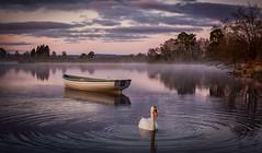 Loch Rusky Sunrise (Katherine Fotheringham) Tags: water clouds sunrise scotland swan loch rusky