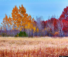 Fall Trees 2015 #1 (Matt Anderson Photography) Tags: autumn sky usa lake reflection grass vertical wisconsin forest season landscape outdoors photography golden leaf pond midwest day pattern farm newengland nopeople canyon farmland hills madison ethereal glowing marsh agriculture idyllic dreamland scenics baraboo daydreaming selectivefocus orangecolor wonderlust colorimage ruralscene beautyinnature deciduoustree autumncollection lushfoliage genericlocation tranquiltranquility waterfallbush nonurbanchange timothytravel