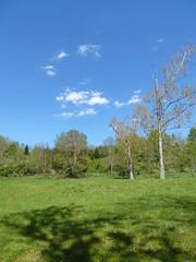 Journe ensoleille (Malys_) Tags: nature ombre bleu ciel nuage arbre herbe pr