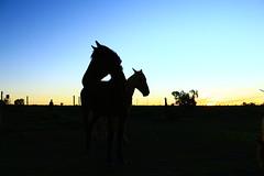 IMG_4212 (Jud@th) Tags: travel horse sunlight colour travelling nature beautiful beauty silhouette southafrica cool sundown earth traveller naturephotography artphoto artinnature natureperfection travelphotogaphy earthpix