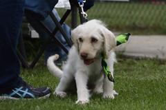 puppy at baseball game (Casey Stinnett) Tags: usa dogs liberty texas