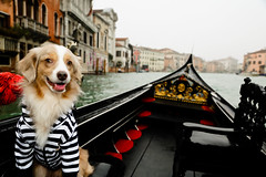 Little Gondolier in Venice