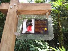 "Tikal <a style=""margin-left:10px; font-size:0.8em;"" href=""http://www.flickr.com/photos/127723101@N04/26214495866/"" target=""_blank"">@flickr</a>"