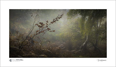 Burnham Beeches (tobchasinglight) Tags: mist woodland buckinghamshire burnham cityoflondon burnhambeeches corporationoflondon farnhamcommon englishwoodland autumn2015