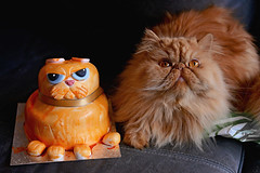 Happy Purrthday (Mark Liddell) Tags: red orange pet cute face animal cake cat design amber ginger baking persian eyes furry flat tabby tail fluffy whiskers grumpy wilfred doppelganger doppelgnger pedigree smooshed