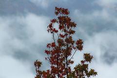 IMG_9437 (Volvtil) Tags: chile naturaleza nature cajondelmaipo