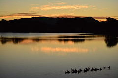 Sunset 28 4 16 (Luke6876) Tags: sunset mountain reflection bird animal wildlife coot australianwildlife eurasiancoot