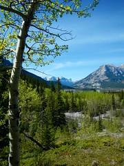 Heart Mountain Scramble - Nearing trail's end (benlarhome) Tags: mountain canada trek kananaskis rockies hiking path hike trail alberta rockymountain scramble scrambling exshaw heartmountain
