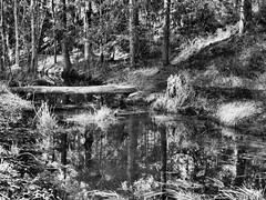Logout (Jens Haggren) Tags: bridge trees light bw creek forest reflections mono log sweden path olympus em1 nacka