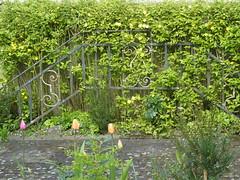 R0027517 (joachimelbing) Tags: garten gelnder schmiedeeisen