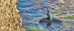 (Isien Kuo) Tags: blue sea wild green bird nature water animal rock landscape island photography photo g sony ngc taiwan tele   f4 geographic   taitung    oss  telelens   ludao alcedinidae  18105mm a6000  selp18105g ilce6000
