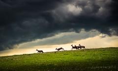 Escape (go-Foto) Tags: storm spring escape deer