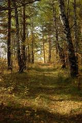 DSC_6006 (Rustam Bikbov) Tags: autumn september 2012    sverdlovskoblast