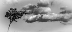 El arbol que piensa... / Thinking tree (Yoli Of Shalott) Tags: naturaleza tree nature monochrome clouds arbol nubes
