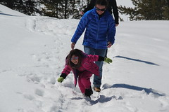 Jovie falling in the snow (Aggiewelshes) Tags: travel winter snow lisa april wyoming olsen jacksonhole colterbay jovie grandtetonnationalpark 2016 gtnp