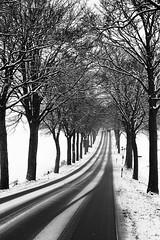 Winterliche Allee-Strae im Harzvorland (Klaus Fritsche) Tags: winter harz allee strase