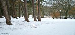 styczen 2010 131 (Elisabeth Gaj) Tags: elisabethgaj sweden szwecja sverige skåne europa winter park snow natur nature trees malmö 100commentgroup