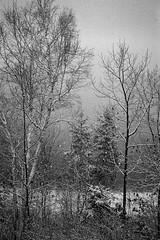 Snow on the TransCanada Trail (chrism229) Tags: film neopan400 leicam2 fujineopan400 kodakhc110 film:iso=400 film:brand=fuji developer:brand=kodak developer:name=kodakhc110 film:name=fujineopan400 hasselbladx1 summilux35fle filmdev:recipe=10611
