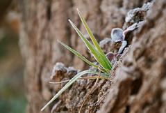 Life (CaptureTheDetails) Tags: life plant macro leaves sign bokeh details brina trunk icy tronco leben pianta ghiaccio