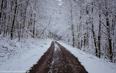 A walk in the snowy Forest 2. (andreasheinrich) Tags: trees winter cold forest germany deutschland snowy path verschneit january hills kalt wald bäume weg hügel badenwürttemberg neckarsulm nikond7000