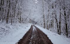 A walk in the snowy Forest 2. (andreasheinrich) Tags: trees winter cold forest germany deutschland snowy path verschneit january hills kalt wald bume weg hgel badenwrttemberg neckarsulm nikond7000