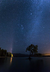 The famous Wanaka tree under the night stars, Wanaka, New Zealand (Maria_Globetrotter) Tags: trip travel newzealand summer vacation portrait lake tourism beautiful night canon wow wonderful way landscape photography high amazing cool nice fantastic good famous sightseeing tranquility visit calm astro iso clear destination format traveling exploration milky 6d oceania 6400 2016 oceanica 2015 photolandscape img1944 mariaglobetrotter wwwmariaswardcom