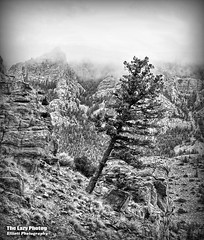 Oct 13 2013 - Prosper where you are planted (lazy_photog) Tags: white black tree beautiful photography bill buffalo scenery rocks north fork canyon reservoir lazy leaning elliott photog