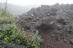 DSC_5662 (Kent MacElwee) Tags: latinamerica volcano highlands guatemala antigua centralamerica pacaya lavarocks activevolcano volcanpacaya
