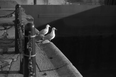 Gulls (the underlord) Tags: slr film liverpool gulls olympus patterson pierhead albertdock expiredfilm outofdate olympusom2n om2n kodakd76 expired2001 phototec100 sixminutesatstock