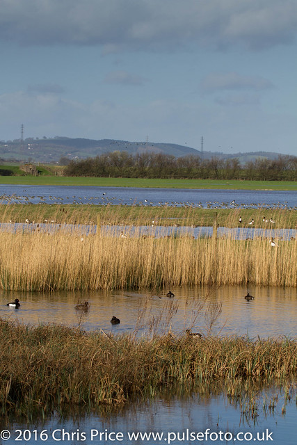 WWT Slimbridge