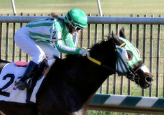 "2015-12-19 (33) r6 Lauralea Glaser on #2 Q's Jack (JLeeFleenor) Tags: photos photography md marylandracing laurelpark marylandhorseracing jockey جُوكِي ""赛马骑师"" jinete ""競馬騎手"" dżokej jocheu คนขี่ม้าแข่ง jóquei žokej kilparatsastaja rennreiter fantino ""경마 기수"" жокей jokey người horses thoroughbreds equine equestrian cheval cavalo cavallo cavall caballo pferd paard perd hevonen hest hestur cal kon konj beygir capall ceffyl cuddy yarraman faras alogo soos kuda uma pfeerd koin حصان кон 马 häst άλογο סוס घोड़ा 馬 koń лошадь femaleathletes femalejockey winner maryland"