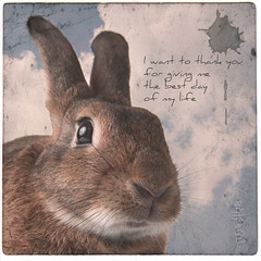 Thank You (Jeric Santiago) Tags: pet rabbit bunny animal thankyou conejo photograph dido lapin hase kaninchen fauxvintage   winterrabbit