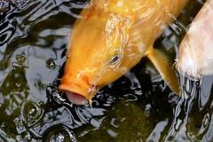 Bubble Fish (Nemodus photos) Tags: fish poisson jardinexotique exoticgarden fz1000 botanicalgardenofmonaco jardinbotaniquedemonaco