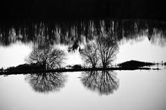 Estampe (J.Martin14) Tags: eau dessin ombre reflet paysage fusain