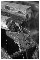 De l'eau (DavidB1977) Tags: bw france nikon eau nb iledefrance 18105 valdemarne sucyenbrie d7100 ormessonsurmarne parcdpartementaldumorbras