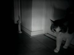 20160208-002634-i-1 (Catflap central) Tags: camera dog pet cats woof cat pi raspberry meow doggie catdoor catflap kattenluik katzenklappe catflapj2nnl taggingasdoguntilautotagginghasanoptout robotaggingisthedevil