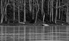 Dock On An Icy Pond. (Catskills Photography) Tags: winter blackandwhite ice reflections landscape boat dock pond canon55250mmislens