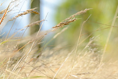 Last post (Martzimages) Tags: grass fence dof bokeh fencefriday martzimages