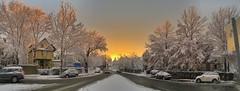 Winter Sunset ((Jessica)) Tags: trees winter panorama snow ice boston golden frozen massachusetts newengland somerville pw winterstormlexi