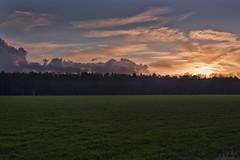 Sunset (jan.arnds) Tags: blue trees winter sunset sky orange sun green nature field set clouds outside warm shine horizon harmony janarnds
