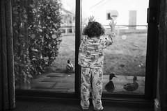 scarlett and the ducks (matthewheptinstall) Tags: morning holiday window daughter ducks patio littlegirl