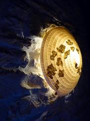 Luminaire Galaxie (vue de profil) (l'attribut-lumire) Tags: light lumire dcoration intrieur clairage luminaire papierwashi