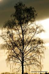 Abendlicht (grafenhans) Tags: light licht sony alpha 700 tamron baum abendhimmel abendsonne a700 alpha700 grafenwald 5663200400