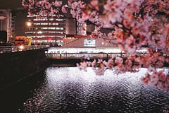 Cherry Blossoms & Train (Gai) Tags: pink light flower station japan night train river cherry tokyo spring blossoms jr line   sakura      ichigaya           jr