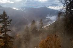 A heavy silence (RKAMARI) Tags: autumn trees colour fall nature fog forest nationalpark high dramatic serenity bolu yedigller flickrsbest