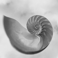 Nautilis in black-and-white (Louise Lindsay) Tags: shell nautilus iphone nautilusshell iphoneography instagram