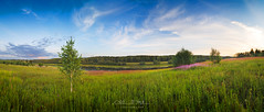 Panorama of green field with a tree on blue sky background (czdistagon.com) Tags: road wood travel flowers blue autumn wild summer sky panorama cloud sun reflection tree green nature water ecology beautiful beauty field grass weather horizontal rural forest sunrise river landscape freedom countryside spring woods village view natural outdoor scope background horizon country scenic meadow free sunny panoramic explore land russian volga birches distagont2821